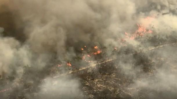 Weltnaturerbe von Flammen zerstört