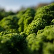 Grünkohl gilt als Wintergemüse mit vielfältigen gesundheitlichen Vorzügen.