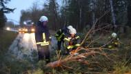 Feuerwehrleute räumen einen Baum von der Straße, der nahe dem brandenburgischen Niemtsch auf die Fahrbahn gefallen ist.