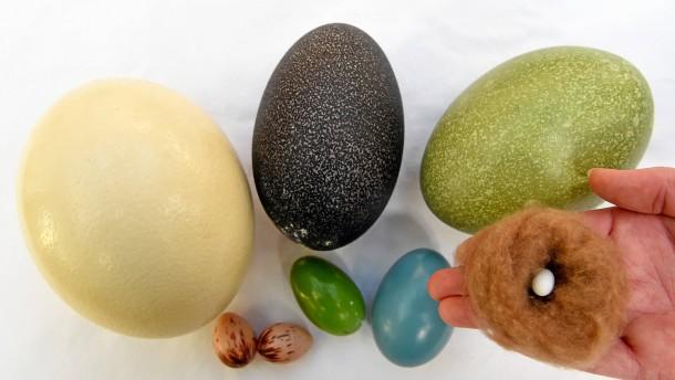 Harte wahl im eier casting