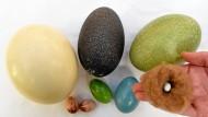 Harte Wahl: Im Eier-Casting gewinnt der Strauß bei der Größe gegen seine gefiederte Konkurrenz.