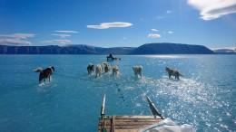 Foto von Schlittenhunden auf dem Grönlandeis geht um die Welt