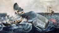 """Als die Jagd für die Jäger noch gefährlich werden konnte: """"Erlegung eine Pottwals"""", kolorierter Stich nach einem 1835 entstandenen Gemälde von William Page"""