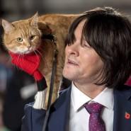 """Gemeinsam auf dem roten Teppich: James Bowen und seine Katze Bob treffen 2016 zur Weltpremiere von """"A Street Cat named Bob"""" ein."""