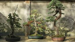Der Bonsai liegt im Trend