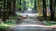 Grüner als 2015: Der Stadtwald hat vom Regen im Sommer profitiert.