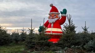 Grüne Weihnachten: Ein Weihnachtsmann steht in einer Weihnachtsbaumplantage bei Leipzig.