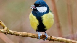 Vögel passen sich zu langsam an den Klimawandel an