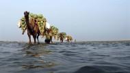 Manchmal geht die indische Wirtschaft doch sehr eigene Wege: Melonentransport am Ganges