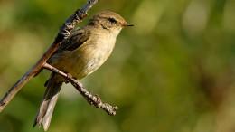 Mehr Vögel als zuletzt überwintern in heimischen Gefilden