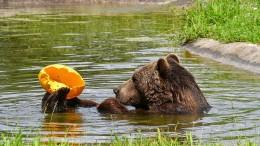 """""""Bären kommen mit Hitze gut zurecht"""""""