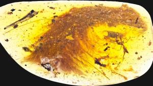 Konservierter Dino-Schwanz entdeckt