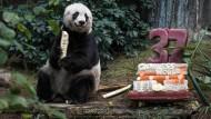 Ältester Panda in Hongkong gestorben