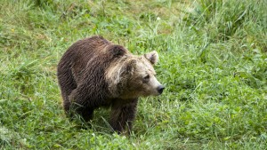 Mit Sturmhaube im Tal der Bären