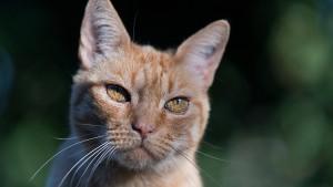 Katze tapst auf Kochfeld und löst Küchenbrand aus