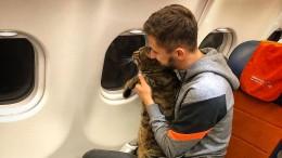Russe schmuggelt dicken Kater ins Flugzeug