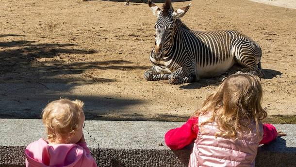 Die Ansprüche der Zebras