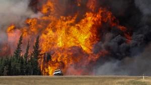Waldbrände entwickeln sich zur teuersten Naturkatastrophe