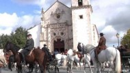 Perfekte Pferde aus Portugal
