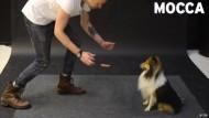 Wie der Hundemagier Jose Ahonen zum Youtube-Star wurde