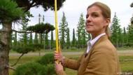 Auf der Suche nach dem perfekten Baum
