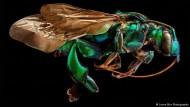 Die Schönheit der Riesen-Insekten: Fotografien von Levon Biss