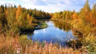 Wald und Wiesen in Finnlands Norden
