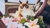 Grumpy Cat steht auf Opel