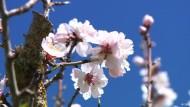 Frühlingsgrüße aus Mallorca