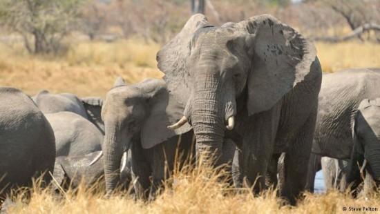 Grenzenlose Liebe zu Elefanten