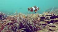 See-Nomaden wollen Inselparadies retten