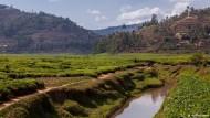 Ohne das Rugezi-Moor droht Ruanda Wasserknappheit