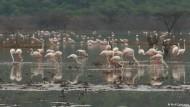 Naturschutz am Bogoria-See zahlt sich aus