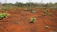 Maya-Nachfahren müssen heilige Wälder roden, um zu überleben