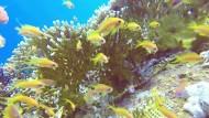 Diese Korallen trotzen dem Klimawandel