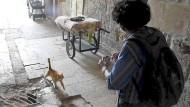 Die Katzenfrau von Jerusalem