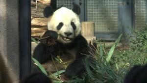 Kuschelzeit für Tokios Pandas