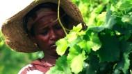 Guter Tropfen aus Äthiopien
