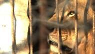 Zootiere sterben in ihren Käfigen