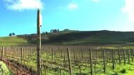 Klassische Musik für Wein