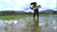 Reis aus dem Großstadtdschungel