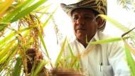 Reisbauern leiden unter Klimawandel