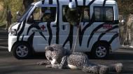 Notfallübung in japanischem Zoo: Kuscheltier verhaftet