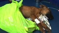 Tierarzt mit Herz für die Ärmsten