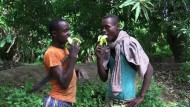 Somalias Bananenproduktion boomt