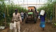 Schuften für Hungerlohn in Mexikos Landwirtschaft