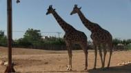 Krise bedroht Tiere im Athener Zoo