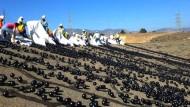 Tausende Bälle spenden Schatten
