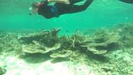 Korallenriffs in höchster Gefahr
