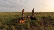 Hunde jagen Tiere für Wilderer